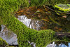 reflections-and-moss-4839