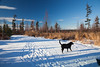 Alaska_Snow_Holly-9810