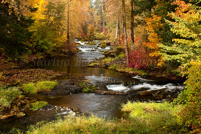 TroutCreek_fall2009_big2-WM_0262