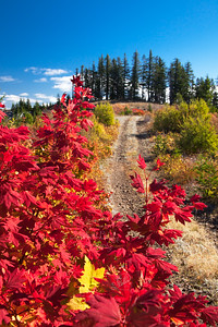 Autumn-Backroads-WM_4883