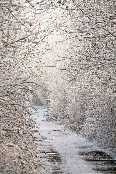 Light in Winter<br /> <br /> Snowy driveway in Trout Lake, Washington takes on a mysterious glow in the winter mist