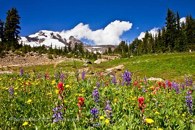 HellroaringViewpoint_flowers_7677-6