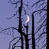 Ghost-Forest-Moon-WM_5425