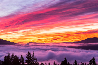 """Sunrise Glory above the Fog"" is a mid December 2013 brilliant pink and orange image taken looking East over the Columbia River covered with a thick layer of fog. This image has been printed as a three panel split on Metal, and each panel is 16x24"" in size, giving a combined wall size of 50x24"". For the Months of February and March this will be on display at North Shore Cafe in White Salmon, Washington with many other of my images."