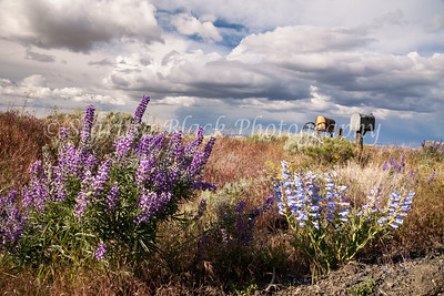 May28_Wildflowers-BickletonHwy-5013
