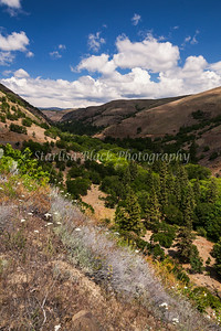May28-RockCreekCanyon-4612