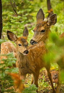 Deer Family, Mother's Love