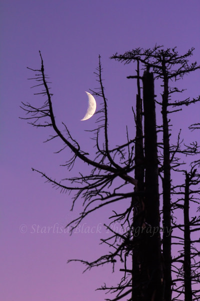 Ghost Forest Moon