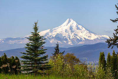 Mount Hood in Spring, from White Salmon