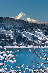 New Snow on Mount Hood and the Gorge taken from White Salmon, Washington half a block from where I live.