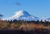 MtAdams_TimberValley_9648