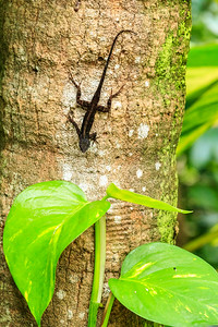 Florida Lizard On A Tree