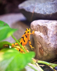 Frogs At Detroit Zoo