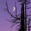 Ghost-Forest-Moon-WM_5424