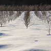 Orchard_snow_Rigglemans-2980