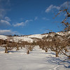 Orchard-snow-Rigglemans-2956
