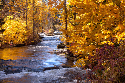 TroutLakeCreek_Oct25_2017_2165