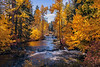 TroutLakeCreek_Oct25_2017_2068
