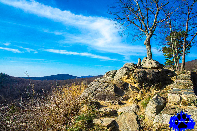 The Art of the Tree, Shenandoah National Park, Tree on Rocks