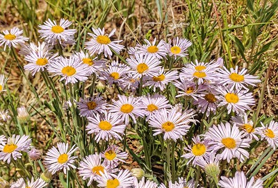 Wildflowers - Curt Gowdy State Park, Wyoming