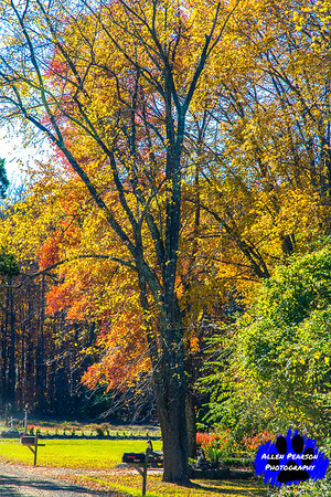 Fall in Loudoun County, Virginia