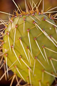 cactus, Grace Kelley Gardens Monaco