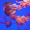 Just Jellyfish
