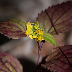 Mystery botanical