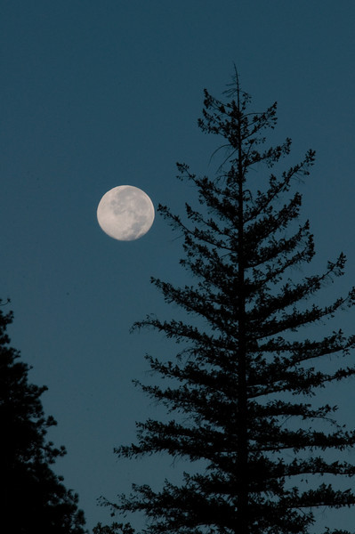 Yosemite moon light