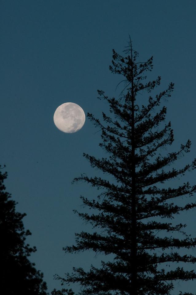 Yosemite moon light