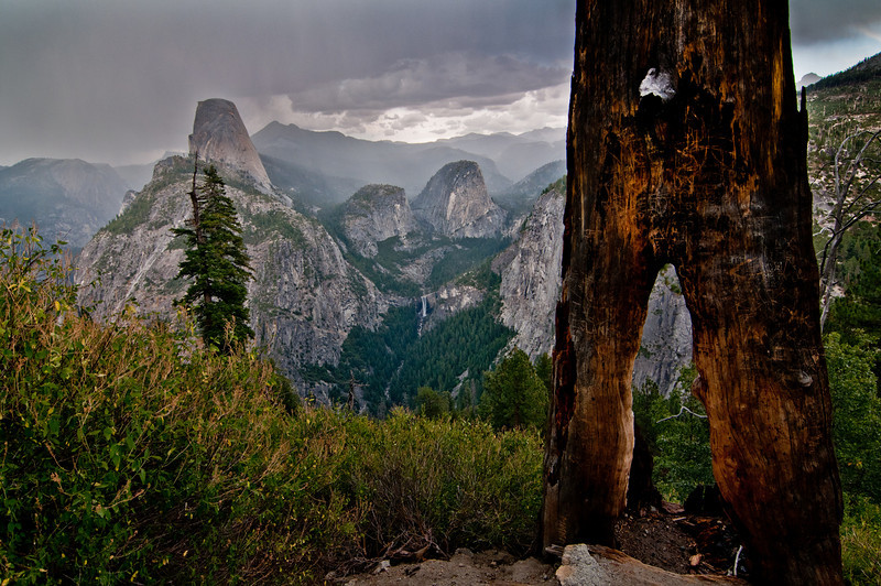 Another view of the valley from the Panorama trail with a burned down tree in the foreground - Yosemite