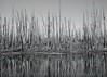 Fire Timber by Pond, landscape