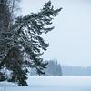 Fallen tree over a winter lake