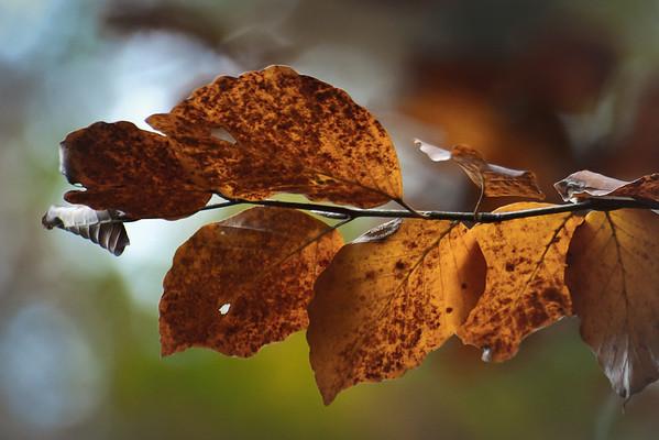 Autumn Leaves | Herbstlaub