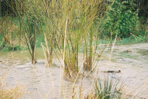 2003 Backyard Flood