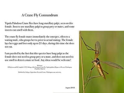 A Crane Fly Conundrum