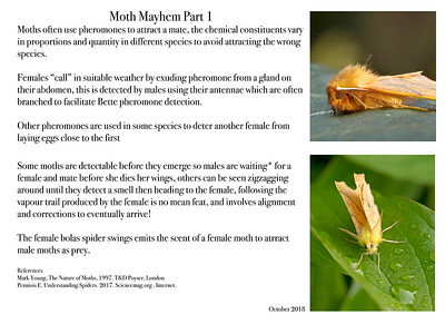 Moth Mayhem Part 1