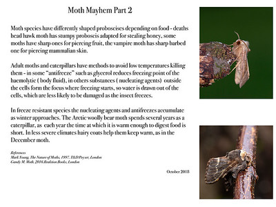 Moth Mayhem Part 2