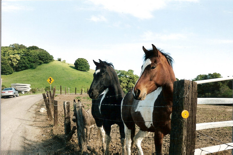 A pair of horses and a donkey (you can barely see him) pose for the camera at a ranch in Franklin Canyon.