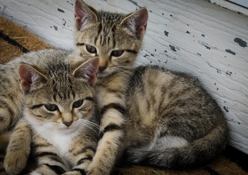 Kittens at Sara's