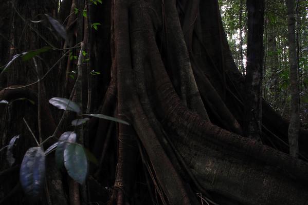 Australian Forest -01