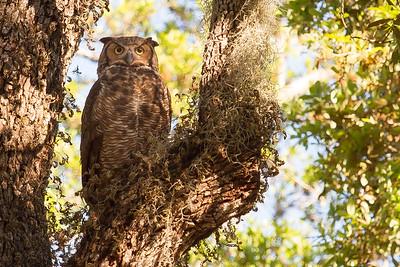 Tampa & Florida birds & wildlife