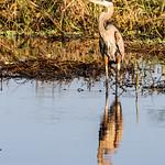 20200922 Myakka River State Park 018