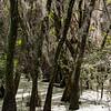 20200920 Myakka River State Park 347