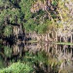 20200922 Myakka River State Park 009