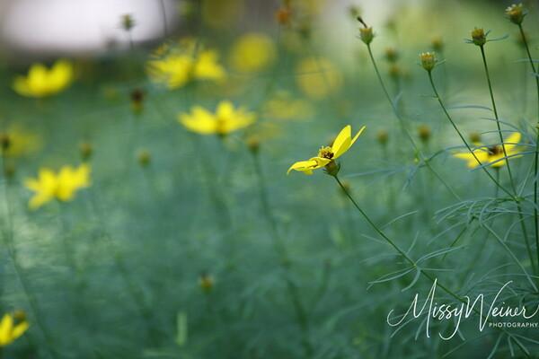 Signal Mountain Flowers_06 25 10_0047