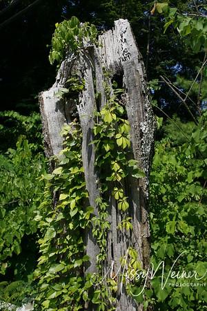 Signal Mountain Flowers_06 25 10_0080