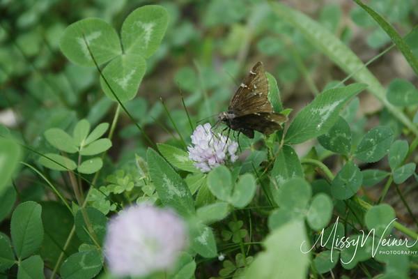 Signal Mountain Flowers_06 25 10_0066