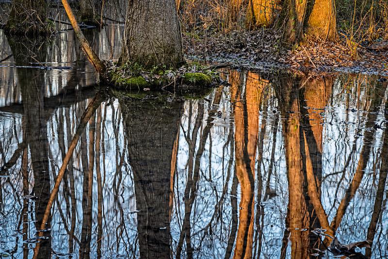 late afternoon reflection at Ebenezer Swamp