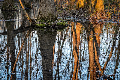 late afternoon reflection at Ebenezer Swamp